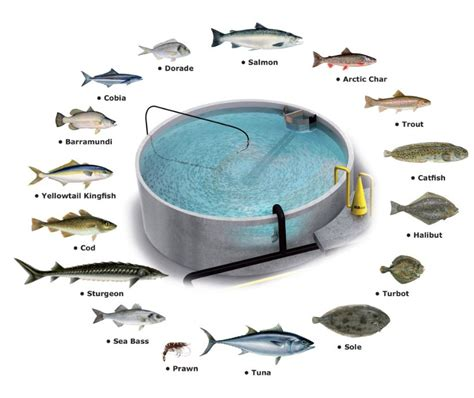 fish farming commerciallybusiness guide profit