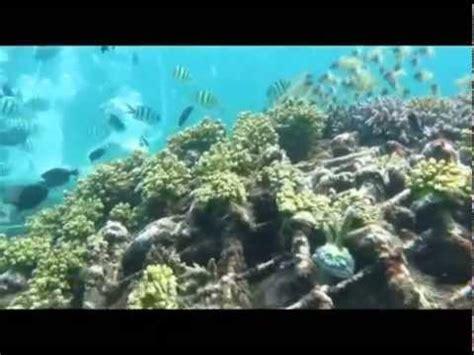 wisata bawah laut dan tanam terumbu karang dengan