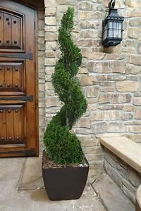 6, Best, Plants, For, Pots, Outside, Front, Door