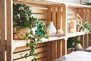 Efeu Als Zimmerpflanze : luftreinigende pflanzen die top 10 plantura ~ Indierocktalk.com Haus und Dekorationen