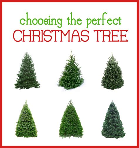 Types Of Christmas Trees  Cheap Filing Cabinets