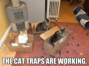 trap cat the cat traps are working