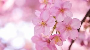 Pink Flowers wallpaper - 857047