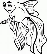 Coloring Fish Goldfish Swimming Clipart Gold sketch template