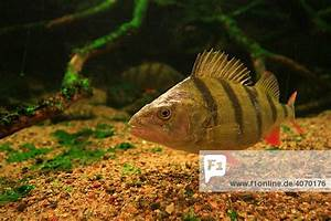 Süßwasserfische Fürs Aquarium : deutschland deutschlands gr tes aquarium f r ~ Lizthompson.info Haus und Dekorationen
