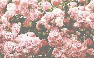 Pink And White Roses Tumblrroses Tumblr Background ...