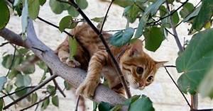 Arbre À Chat Pour Gros Chat : ce courageux petit gar on est rest coinc dans un arbre ~ Nature-et-papiers.com Idées de Décoration