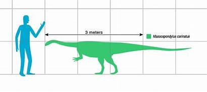 Massospondylus Egg Comparison Human Produces Jurassic Discovery