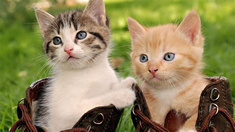 Beautiful Cats,funny Cats,white And Black Cats High