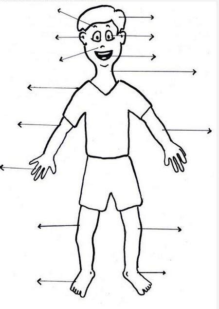 gambar anggota tubuh daunbuah com