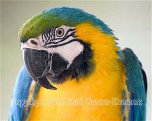 Bird Photography - parrot, cockatoo, azure kingfisher ...