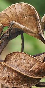 Can You Find The 9 Camouflaged Bugs