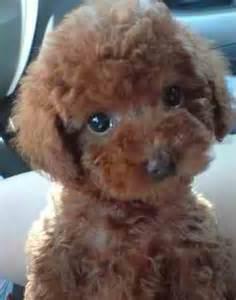 Myth Buster 12: Pets Bring in Good Luck | Sana Ako si ...