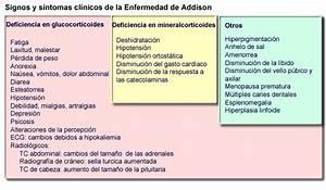 Enfermedad De Addison Related Keywords - Enfermedad De ...