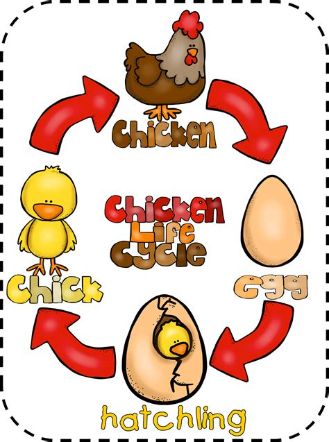 grade wow animal and chicken cycle