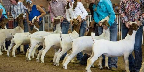 livestock show exhibitor information state fair  texas