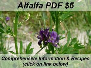 Health Food Store Resume Alfalfa Pictures Flowers Leaves And Identification