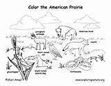 Prairie Coloring Habitat Pages Habitats Animal Dog Biome American Animals Biomes Grassland Science Desert Worksheet Map Drawing Printable Forest Draw sketch template