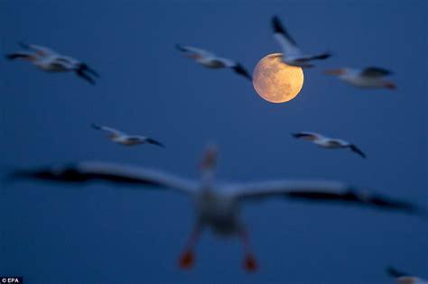 Stargazers Around The World Catch Penumbral Lunar Eclipse