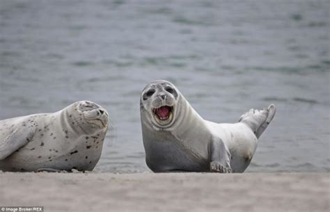 im happy  pictures  smiling seals viewkick