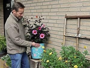 Dahlien überwintern Topf : dahlien im topf berwintern nachrichten landleben wochenblatt f r landwirtschaft landleben ~ Orissabook.com Haus und Dekorationen