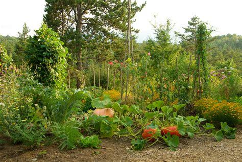 Association De Légumes Au Jardin Potager Bio Nopanic
