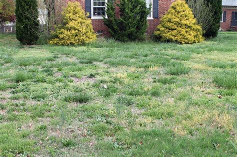 How To Grow Grass In Backyard by Cincinnati Northern Kentucky Lawn Care Tips How To Get