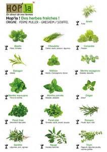 les 25 meilleures id 233 es concernant herbes aromatiques sur herbes aromatiques