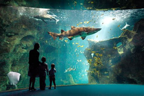 aquarium la rochelle reduction series which places should you visit in europe