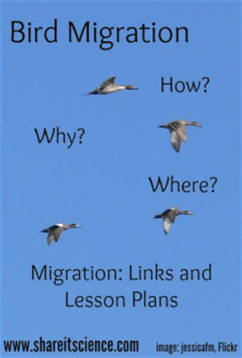 share it science see it share it bird migration