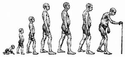 Lifespan Development Span Arginine Timeline Cycle Increase