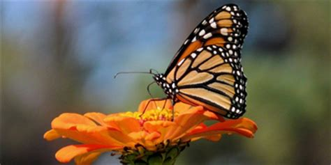 85876 Westminster Butterfly Pavilion Coupon by 5 Admission To Butterfly Pavilion In Westminster On