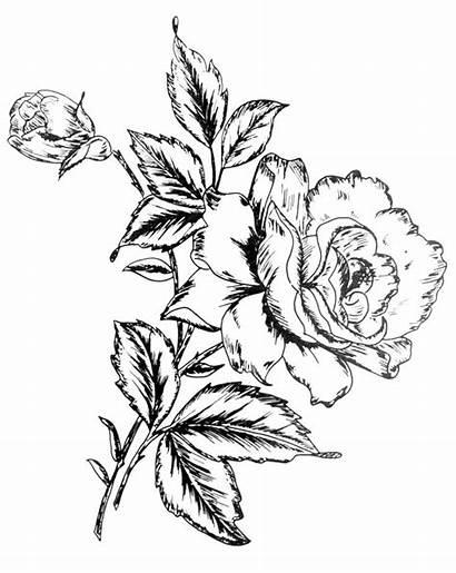 Flower Designs Drawing Rose Corner Digital Flowers