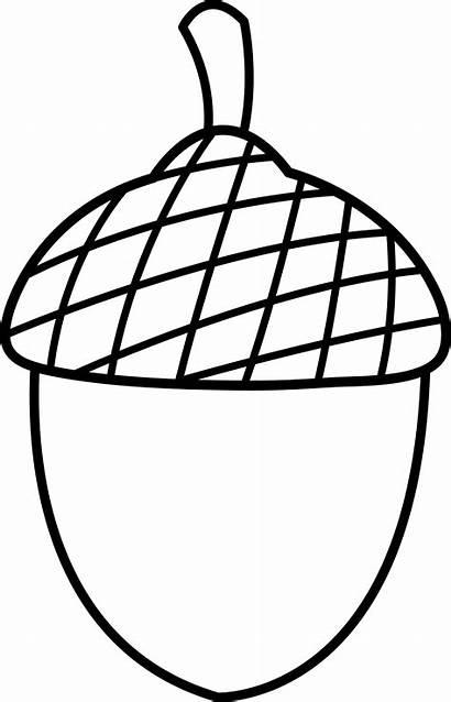 Clipart Acorn Clip Nut Clipartion