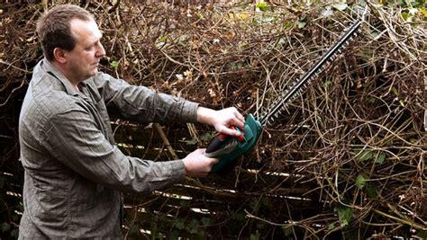 wie lange darf bäume schneiden wie lange darf hecken schneiden gr 228 ser im k 252 bel