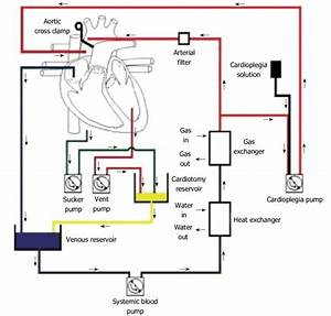 Cardiopulmonary Bypass Circuit Is An Open Circuit In Which