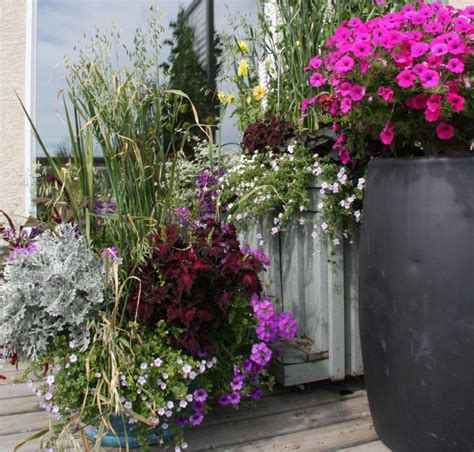 Raising The Stakes On Container Gardening  Toronto Star