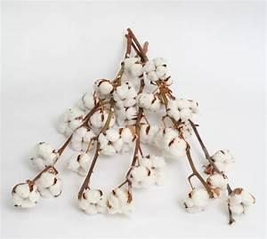 Bouquet Fleur De Coton : tige de fleur de coton branche fleur de coton tige coton ~ Teatrodelosmanantiales.com Idées de Décoration