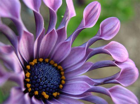 fotos de flores impresionantes  recibir la primavera
