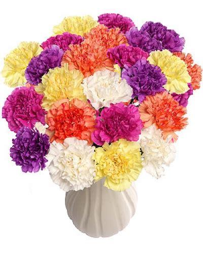 carnation explosion