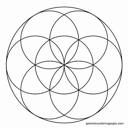 Flower Compass Seed Coloring Circle Drawing Geometry