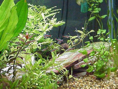 15 stress free freshwater aquarium fish api api