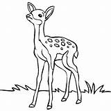 Deer Coloring Pages Enjoyable Leisure Totally Activity Forest Forget Supplies Don sketch template