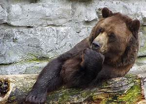 15 Pictures Of Bears Chilling And Thinking About Life