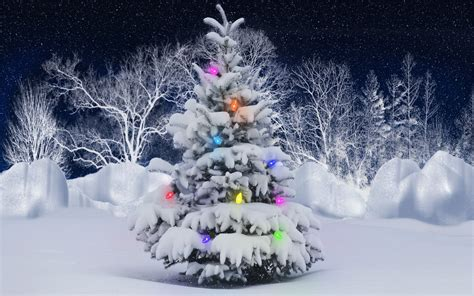 outdoors christmas tree wallpaper 1082965