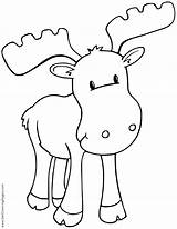 Moose Coloring Getcoloringpages Realistic sketch template