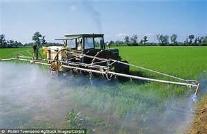Rising levels of ARSENIC in rice 'could be toxic and pose ...