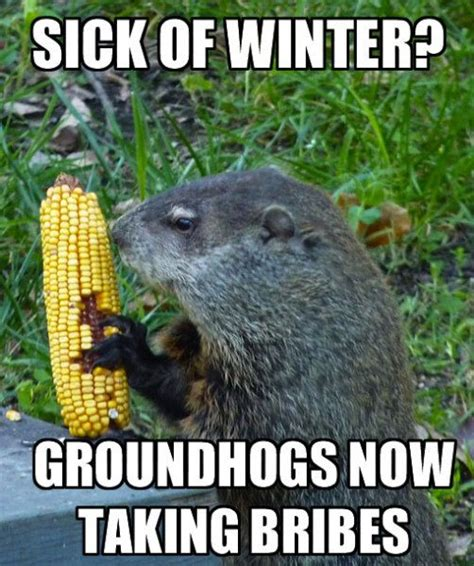 Groundhog Memes - 8 groundhog day memes from 28 images groundhog day 2015 the memes you need to see heavy