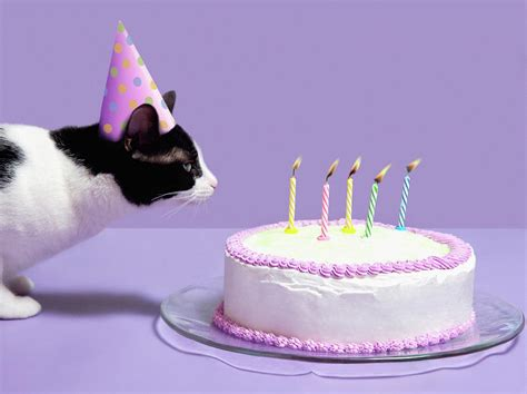 birthday cats cat wearing birthday hat blowing out candles on birthday