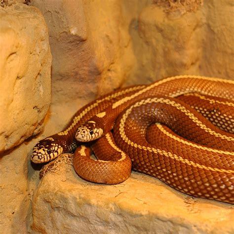 serpent wiktionnaire